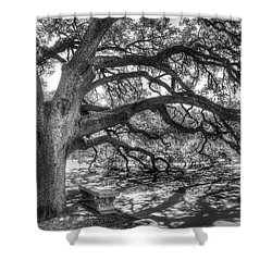 The Century Oak Shower Curtain by Scott Norris
