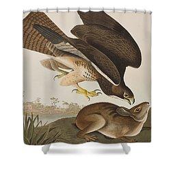 The Common Buzzard Shower Curtain by John James Audubon