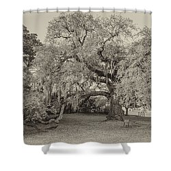 The Dueling Oak - A Place For Dying Bw Shower Curtain by Steve Harrington