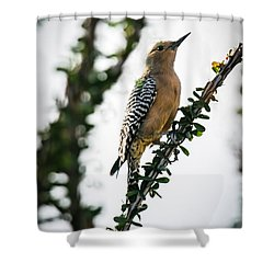 The Gila  Woodpecker Shower Curtain by Robert Bales