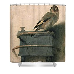 The Goldfinch Shower Curtain by Carel Fabritius