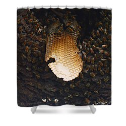 The Hive  Shower Curtain by Shawn Marlow