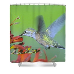 The Humming Bird Sips  Shower Curtain by Jeff Swan