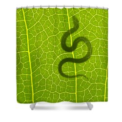 The Hunter Shower Curtain by Aged Pixel