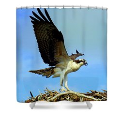 The Landing Shower Curtain by Karen Wiles