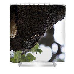 The Live Oak Shower Curtain by Shawn Marlow