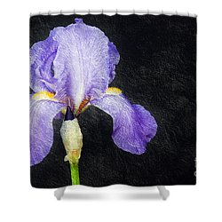 The Lone Iris Shower Curtain by Andee Design