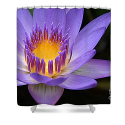 The Lotus Flower - Tropical Flowers Of Hawaii - Nymphaea Stellata Shower Curtain by Sharon Mau