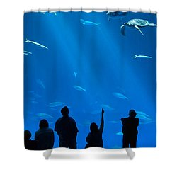 The Magnificent Open Sea Exhibit At The Monterey Bay Aquarium. Shower Curtain by Jamie Pham