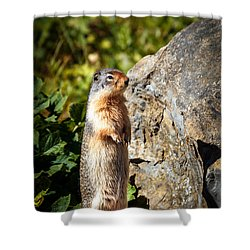 The Marmot Shower Curtain by Robert Bales
