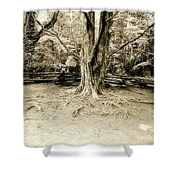 The Matriarch Shower Curtain by Scott Pellegrin