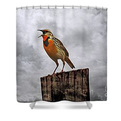 The Meadowlark's Song Shower Curtain by Elizabeth Winter