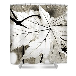 The Mysterious Leaf Abstract Bw Shower Curtain by Andee Design