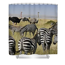 The Odd Couple Shower Curtain by Michele Burgess