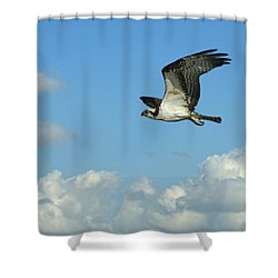 The Osprey 2 Shower Curtain by Ernie Echols