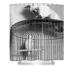 The Parakeet And The Cat Shower Curtain by Underwood Archives