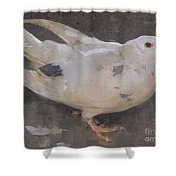 The Pigeon Shower Curtain by Joseph Crawhall