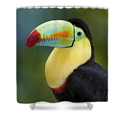The Rainbow Bird.. Shower Curtain by Nina Stavlund