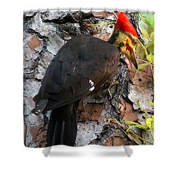 The Southeastern Pileated Woodpecker Shower Curtain by Kim Pate