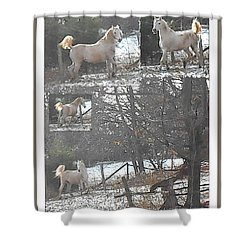 The Stallion Lives In The Country Shower Curtain by Patricia Keller
