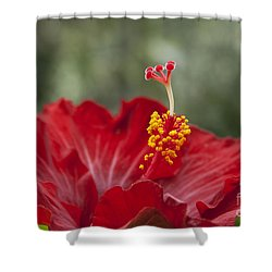 The Star Of Dawn Shower Curtain by Sharon Mau