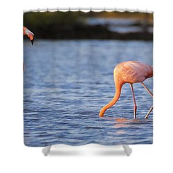 The Three Flamingos Shower Curtain by Adam Romanowicz