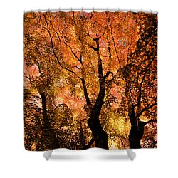 The Trees Dance As The Sun Smiles Shower Curtain by Don Schwartz