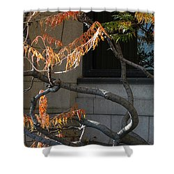 The View Shower Curtain by Joseph Yarbrough