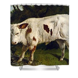 The White Calf Shower Curtain by Gustave  Courbet