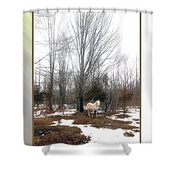 The White Stallion On A Snowless  Mound Shower Curtain by Patricia Keller
