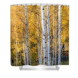 Thin Birches Shower Curtain by Ari Salmela