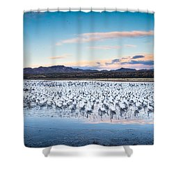Snow Geese And Sandhill Cranes Before The Sunrise Flight - Bosque Del Apache, New Mexico Shower Curtain by Ellie Teramoto