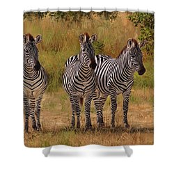 Three Amigos Shower Curtain by David Stribbling