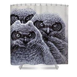 Three Amigos Shower Curtain by Rick Hansen