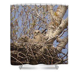Three Baby Owls  Shower Curtain by Jeff Swan