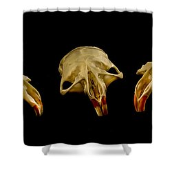 Three Blind Mice Shower Curtain by Jean Noren