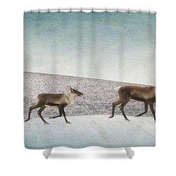 Three Caribous Shower Curtain by Priska Wettstein
