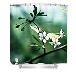 Three Cherry Flowers - Featured 3 Shower Curtain by Alexander Senin