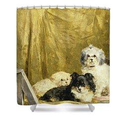 Three Dogs Shower Curtain by Charles van den Eycken