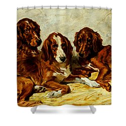 Three Irish Red Setters Shower Curtain by John Emms