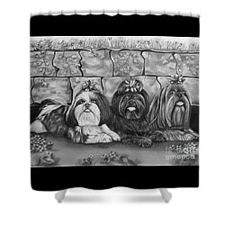 Three Little Shih Tzus Shower Curtain by Lena Auxier