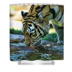 Tiger Drinking Water Shower Curtain by Paul Ward