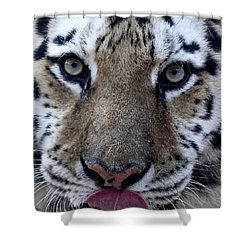 Tiger Lick Shower Curtain by Karol Livote