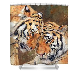 Tiger Love Shower Curtain by David Stribbling