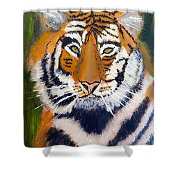 Tiger Shower Curtain by Pamela  Meredith