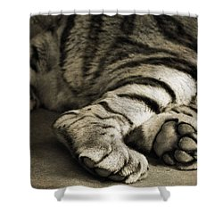 Tiger Paws Shower Curtain by Dan Sproul