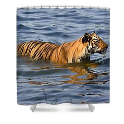 Tigress Of The Lake Shower Curtain by Fotosas Photography