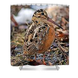 Timberdoodle The American Woodcock Shower Curtain by Timothy Flanigan