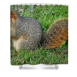 Time To Feast Shower Curtain by Frozen in Time Fine Art Photography