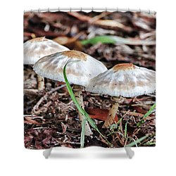 Toadstools V7 Shower Curtain by Douglas Barnard